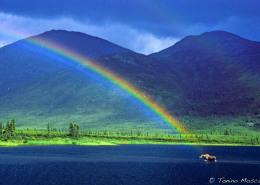 Alaska tmosconi 915121