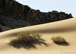 Sinai tmosconi 1411