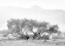 Sinai-tmosconi-992701bw