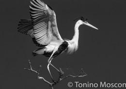 Pantanal_mosconi_11D101